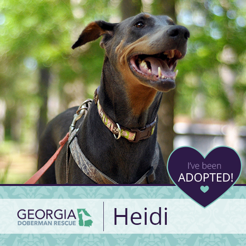 Heidi has been adopted!!